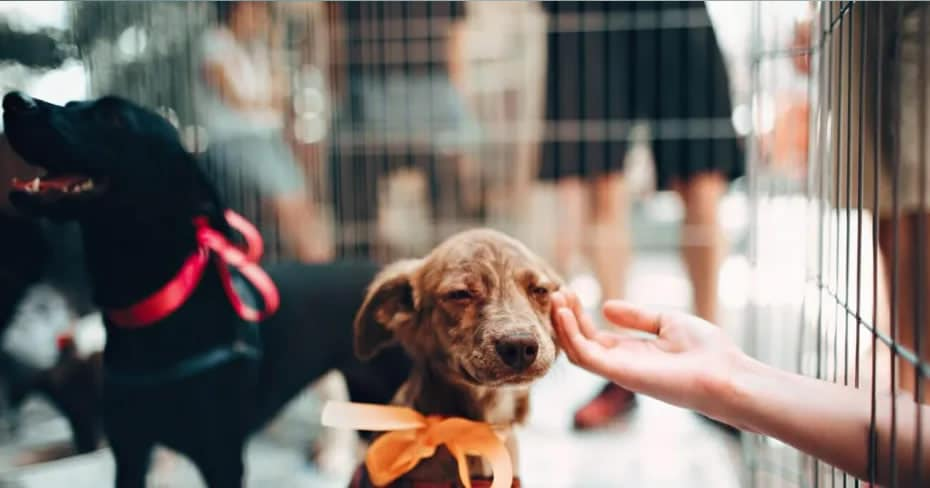 apps-to-adopt-dog