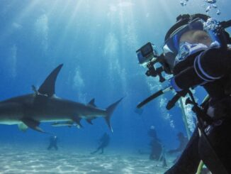 Submersible Housings for GoPro: Models, Features and Prices