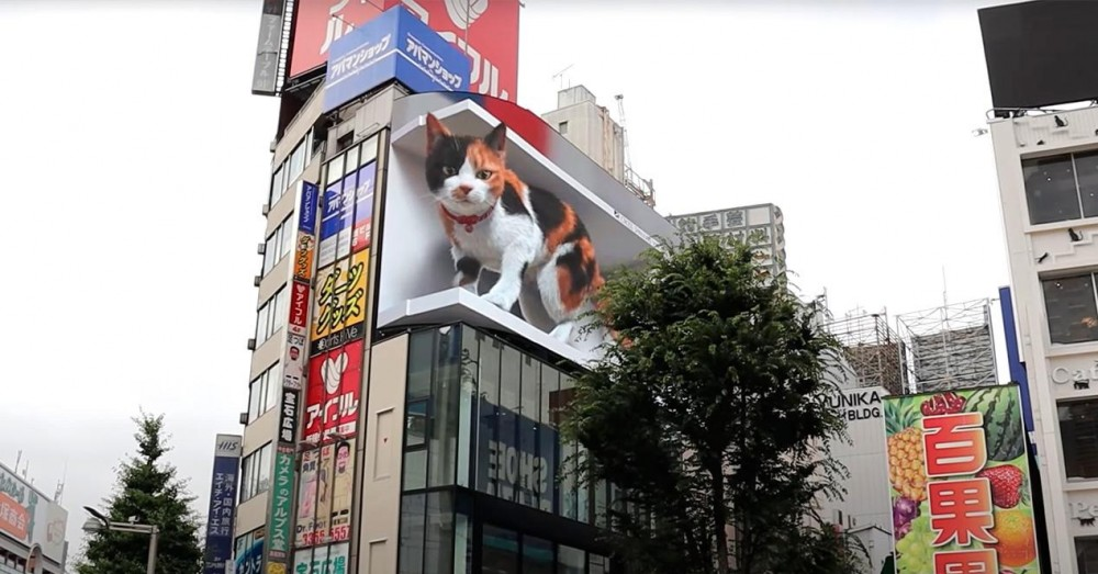 3D Cat Ad that Surprises in Tokyo with 4K Screens